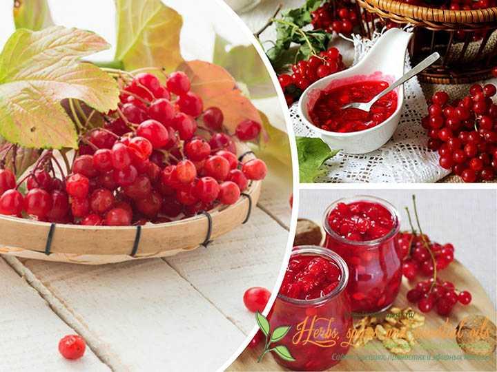Вкусные рецепты витаминного компота из калины