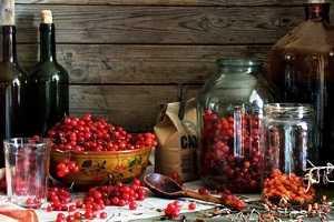 Особенности приготовления наливки из черной смородины в домашних условиях — рецепты
