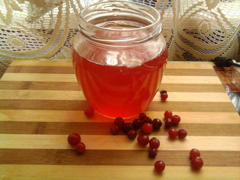 Компот из калины: польза для ребенка и взрослого, как приготовить напиток с яблоками, медом, рецепты заготовок на зиму