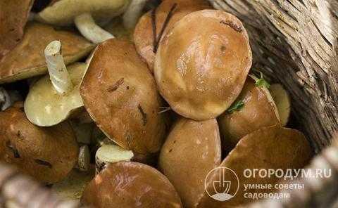 Замороженные подберезовики как готовить. заморозка грибов в домашних условиях на зиму
