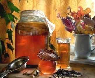 Откуда берется чайный гриб, как его вырастить самостоятельно, как ухаживать за ним?