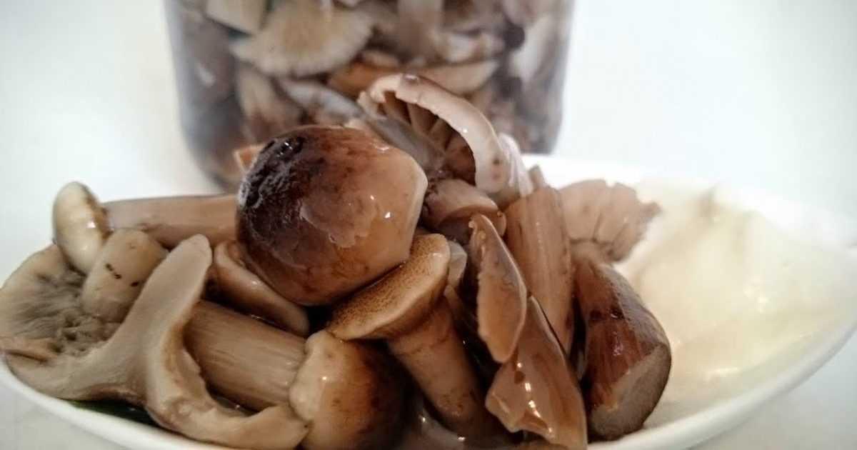 Заморозить рядовки на зиму: основные методы и способы Правила подготовки грибов к заморозке Условия и срок хранения заготовок в морозильной камере