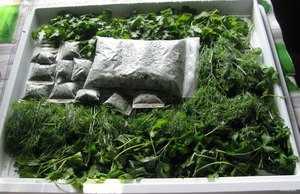Как сушить петрушку в домашних условиях – сушеная на зиму зелень и корень петрушки