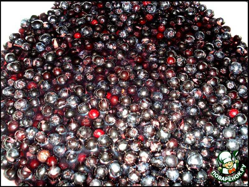 Изюм из черноплодной рябины – вкуснейшее лакомство для всей семьи