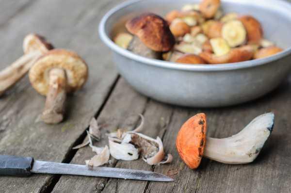 Как заморозить грибы на зиму в морозилке: какие грибы выбрать и способы заморозки