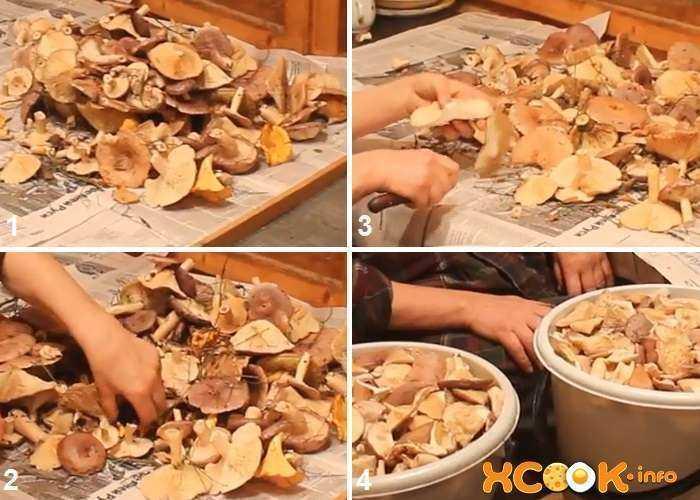 Лучшие рецепты маринованных грибов на зиму в банках с уксусом