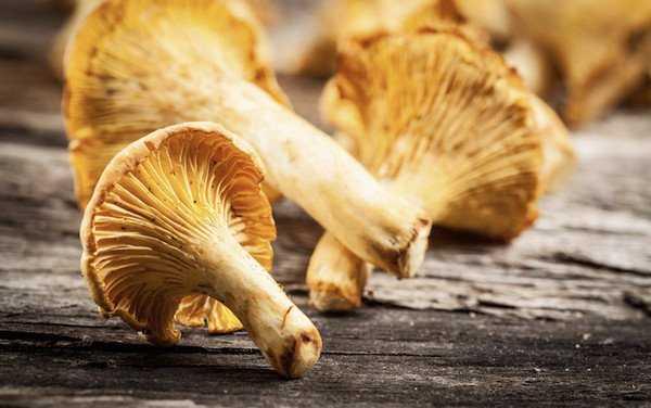 Как заморозить грибы на зиму в морозилке: 3 варианта