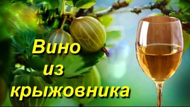 Вино из крыжовника - пошаговые рецепты приготовления в домашних условиях
