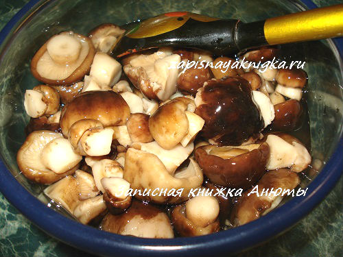 Как солить грибы рядовки рецепт