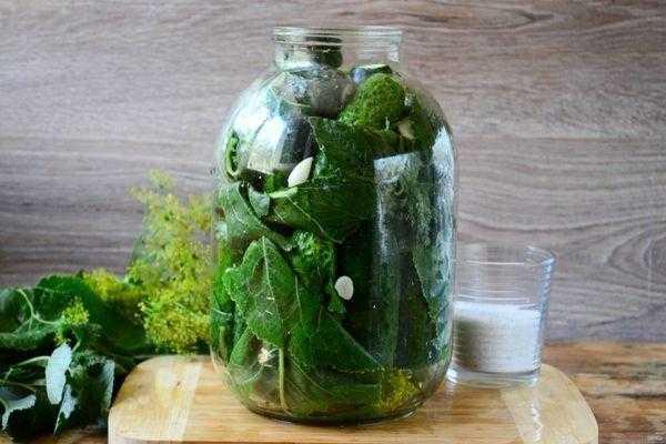 Квашеные огурцы: рецепты на зиму, способы приготовления в банках и бочке, как заквасить переросшие плоды