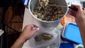 Мороженые опята: можно ли морозить грибы сырыми, вареными и перекрученными и как это делать