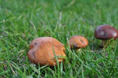 Как приготовить грибы маслята, жареные с картошкой: фото, видео, рецепты приготовления маслят