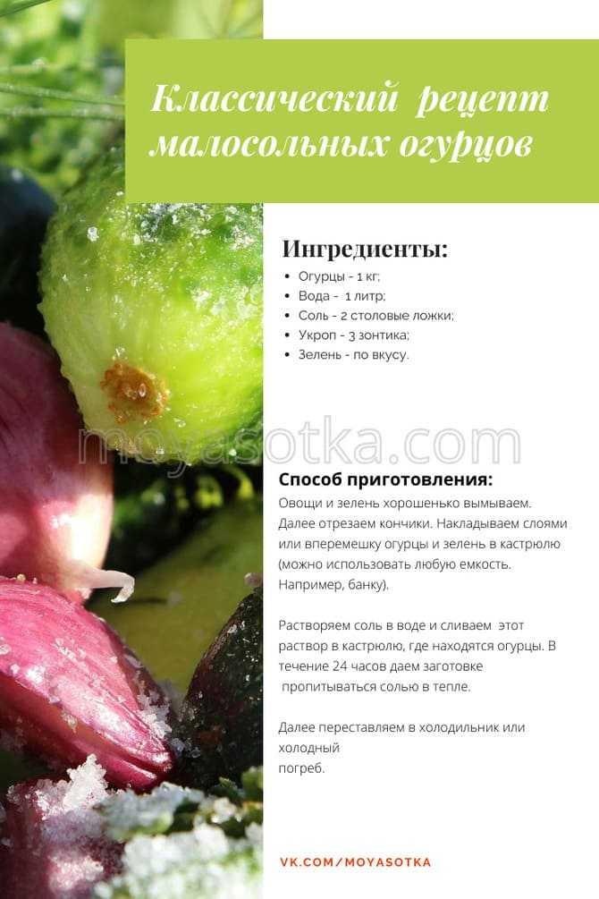 Секреты вкусных малосольных огурцов - будет вкусно! - медиаплатформа миртесен