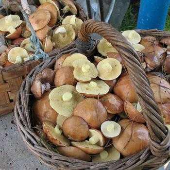 Как заморозить белые грибы: топ 10 простых рецептов на зиму с фото и видео