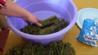Заготовка папоротника орляка на зиму: сушка, заморозка