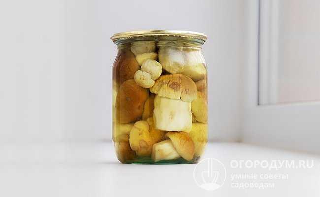 Маслята, замороженные в морозилке на зиму: свежие, сырые, жареные