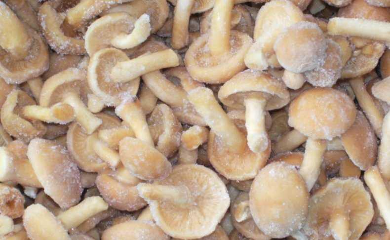 Как заморозить грибы на зиму, какие грибы можно замораживать