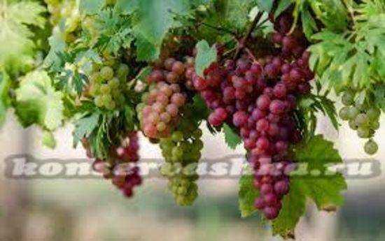 Сухое вино из винограда в домашних условиях: 6 простых рецептов