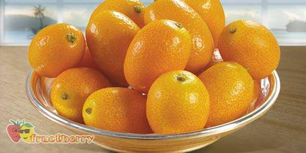 Кумкват сушеный: польза, калорийность, как сушить