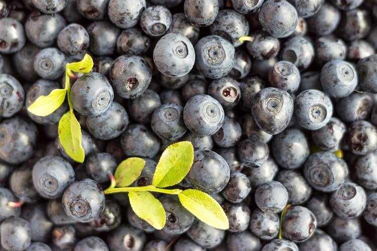 Настойки, наливки, ликеры на черносливе - 15 рецептов на самогоне и водке