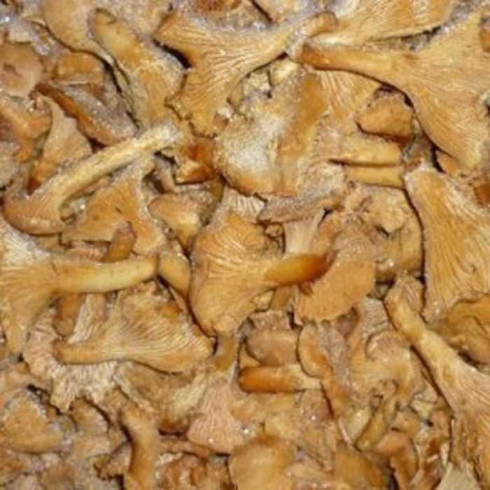 Как правильно заморозить белые грибы на зиму заморозка белых грибов варенными и сырыми