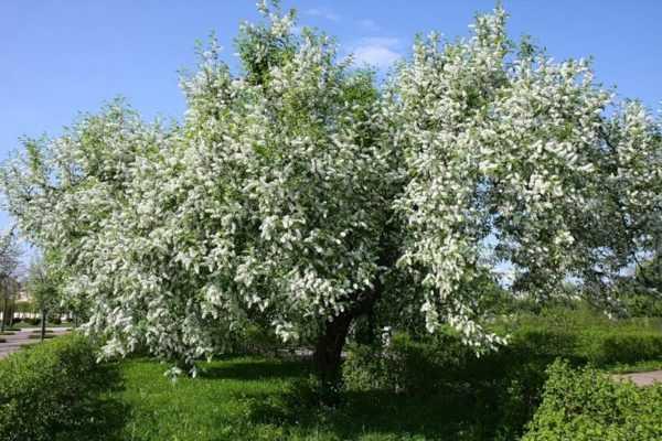 Травы от поноса : инструкция по применению | компетентно о здоровье на ilive