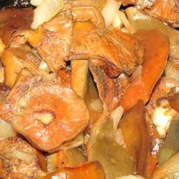 Грибы рыжики, тушеные в сметане и сливках: рецепты и видео приготовления вкусных блюд