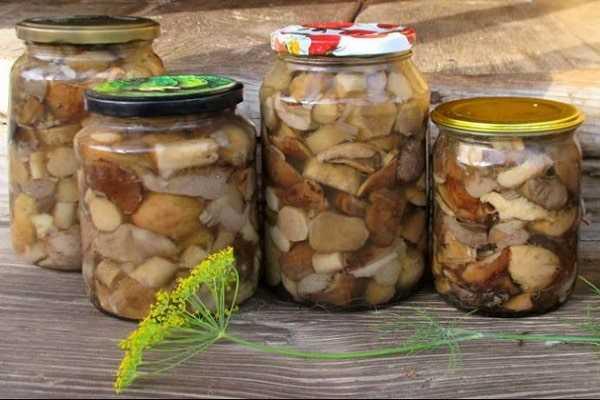 Соленые подосиновики: основные принципы засолки. Подготовка грибов. Самые распространенные рецепты. Правила хранение закуски.