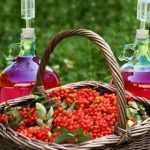 11 простых рецептов настойки из калины в домашних условиях