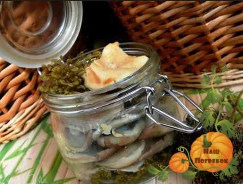 Маринование чёрных груздей: рецепты маринада, как рассчитать на 1 литр с уксусом