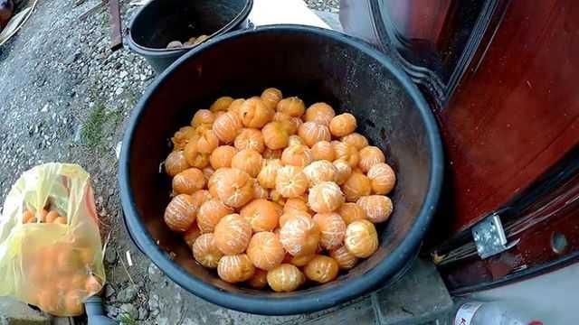 Самогон на мандариновых корках: подготовка ингредиентов, польза и вред настойки
