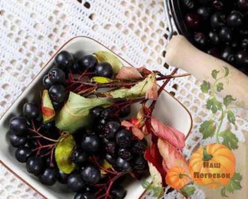 Заготовка черноплодной рябины на зиму: лучшие рецепты, без сахара, без варки