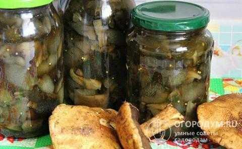 Маринованные белые грибы на зиму в банках — простые рецепты приготовления самых вкусных заготовок
