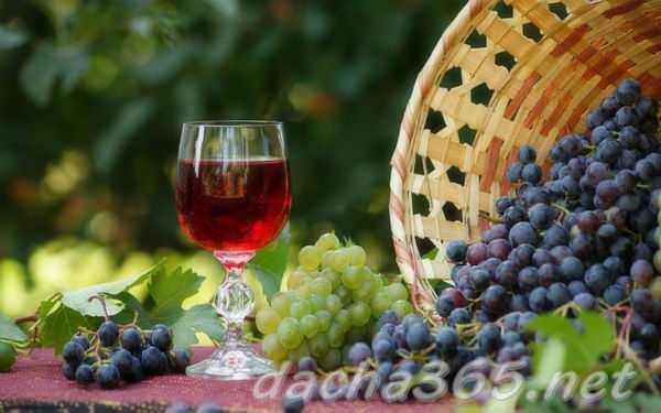Домашнее вино из винограда Изабелла: лучшие рецепты приготовления.
