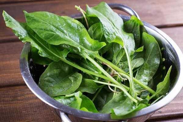 Можно ли замораживать щавель: как правильно заготовить свежую зелень на зиму в домашних условиях и лучше сохранить ее, например, в пакетах и брикетах в холодильнике? русский фермер