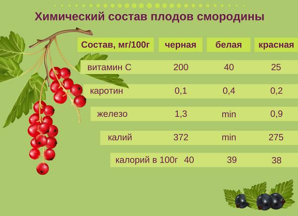 Лучше магазинного чая: как превратить листья малины и смородины в заварку