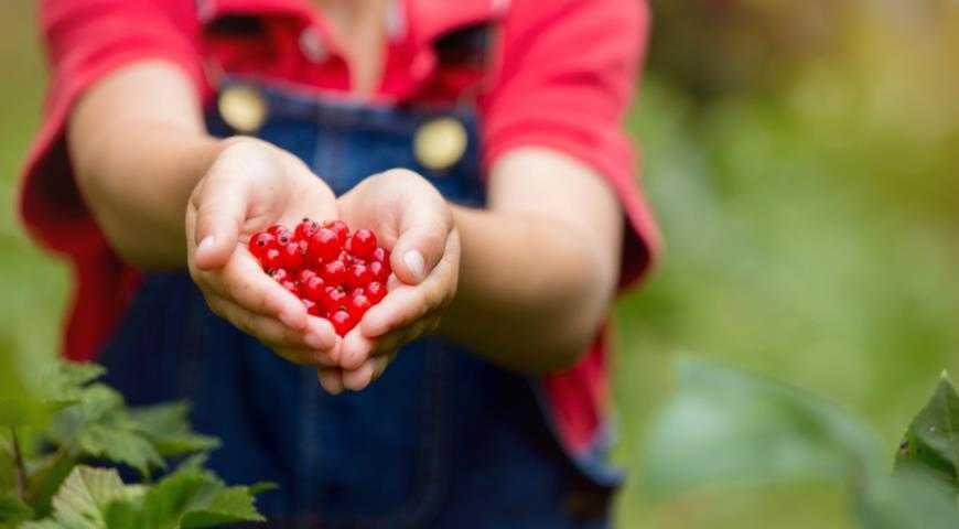 Варенье из красной смородины на зиму — простые рецепты густого варенья
