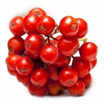 Варенье из красной рябины простые рецепты полезные свойства
