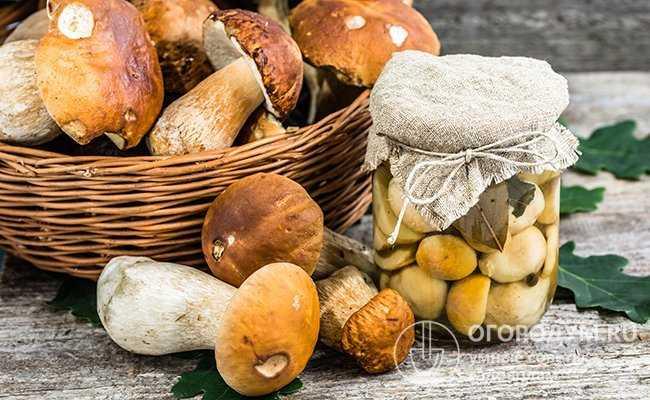 Как сушить грибы в домашних условиях - 5 способов сушки