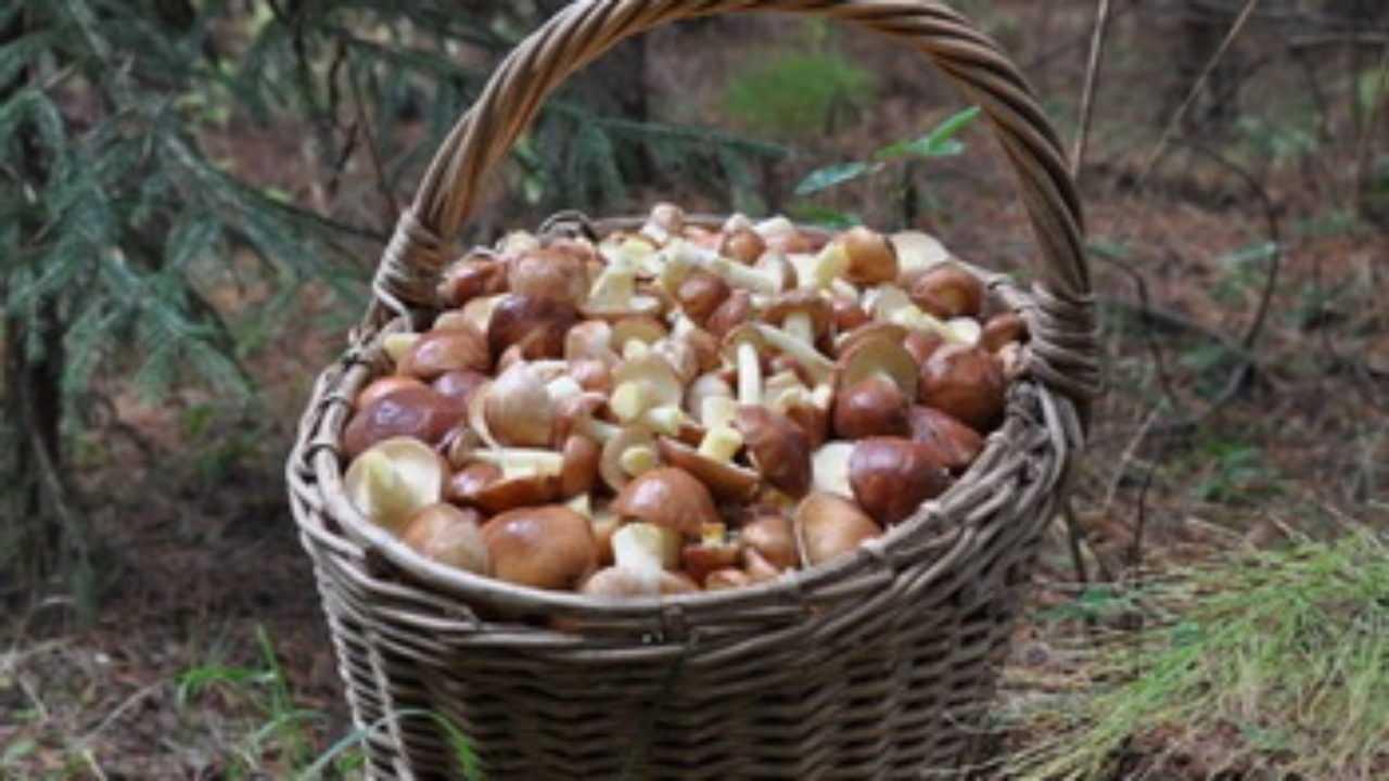 Как заморозить маслята на зиму в морозилке: рецепты приготовления в домашних условиях, обработка, подготовка грибов к заморозке - растения и огород