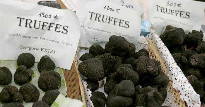 Каков на вкус трюфель – самый дорогой гриб в мире
