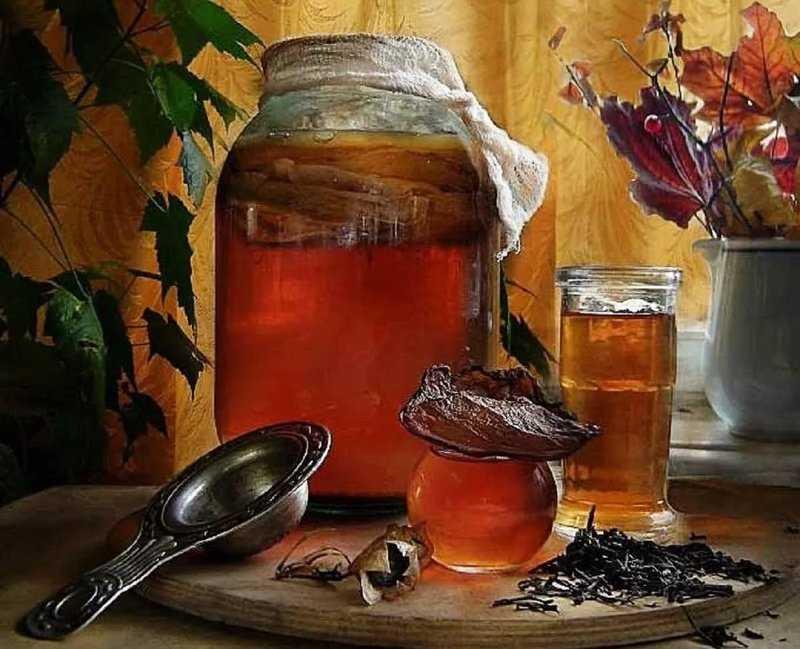 Как правильно употреблять чайный гриб и ухаживать за ним