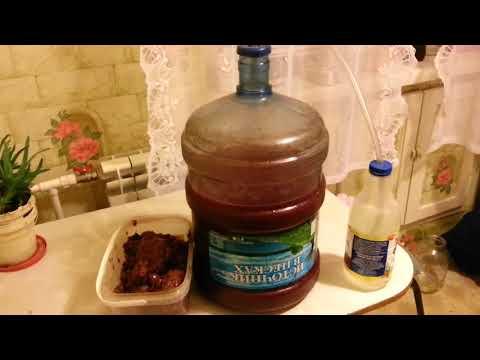 Как сделать вино из терна в домашних условиях. рецепты приготовления домашнего вина из терна пошагово с фото. как сделать вино из терна в домашних условиях