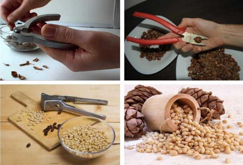 Рецепты настоекна самогоне с кедровыми орешками: на ядрах, скорлупе, пропорции на 3 литра
