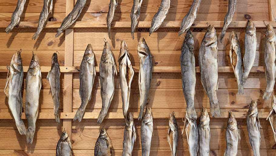 Горячее копчение рыбы - краткое описание основных этапов