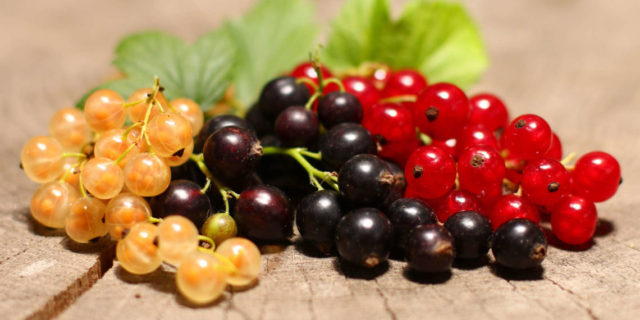 Красная смородина - полезные и опасные свойства красной смородины