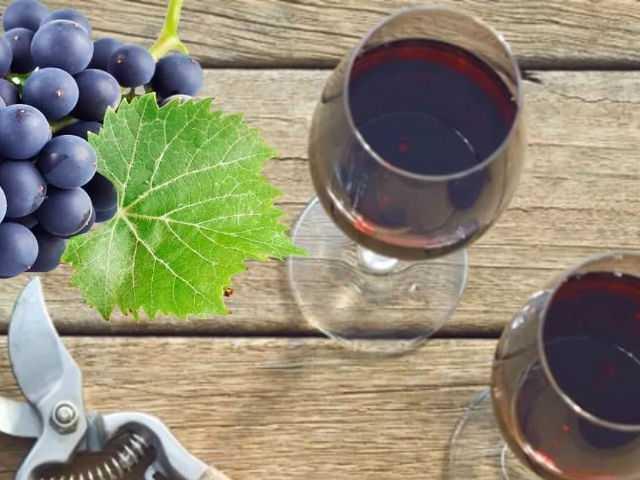 Вино из винограда в домашних условиях, простой рецепт как сделать вино из винограда