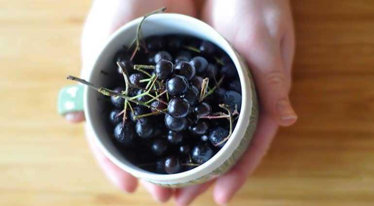 Варенье из черноплодной рябины: свойства, рецепты приготовления