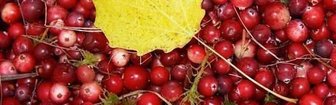 Рецепты блюд из клюквы | компетентно о здоровье на ilive