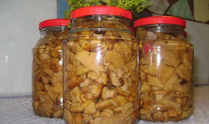 Как грибы лисички приготовить на зиму: способы заготовки и рецепты приготовления с фото